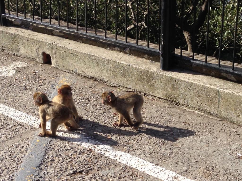 Affen beim Felsen