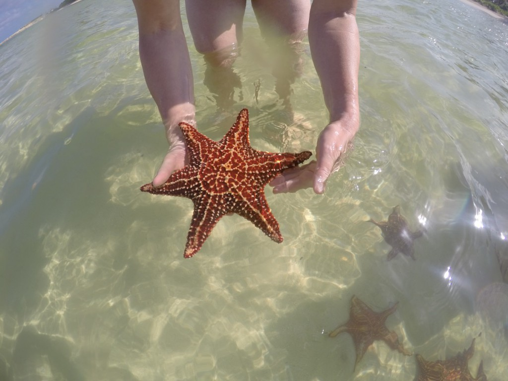 Seestern bei Starfish Point