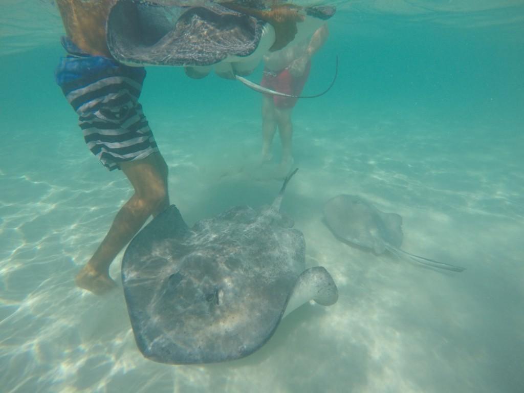 mit Rochen schwimmen - unterwasser