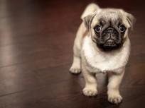 Mit Haustier auf Kreuzfahrt – darf man das?