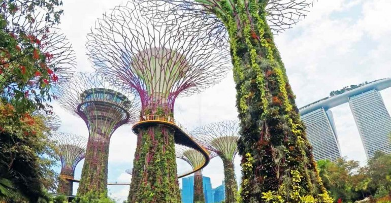 Tree Top Walk – um die Ecke vom Singapur Kreuzfahrthafen