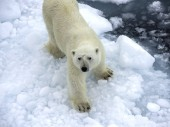 Arktis Kreuzfahrten (ab Spitzbergen) – nützliche Infos