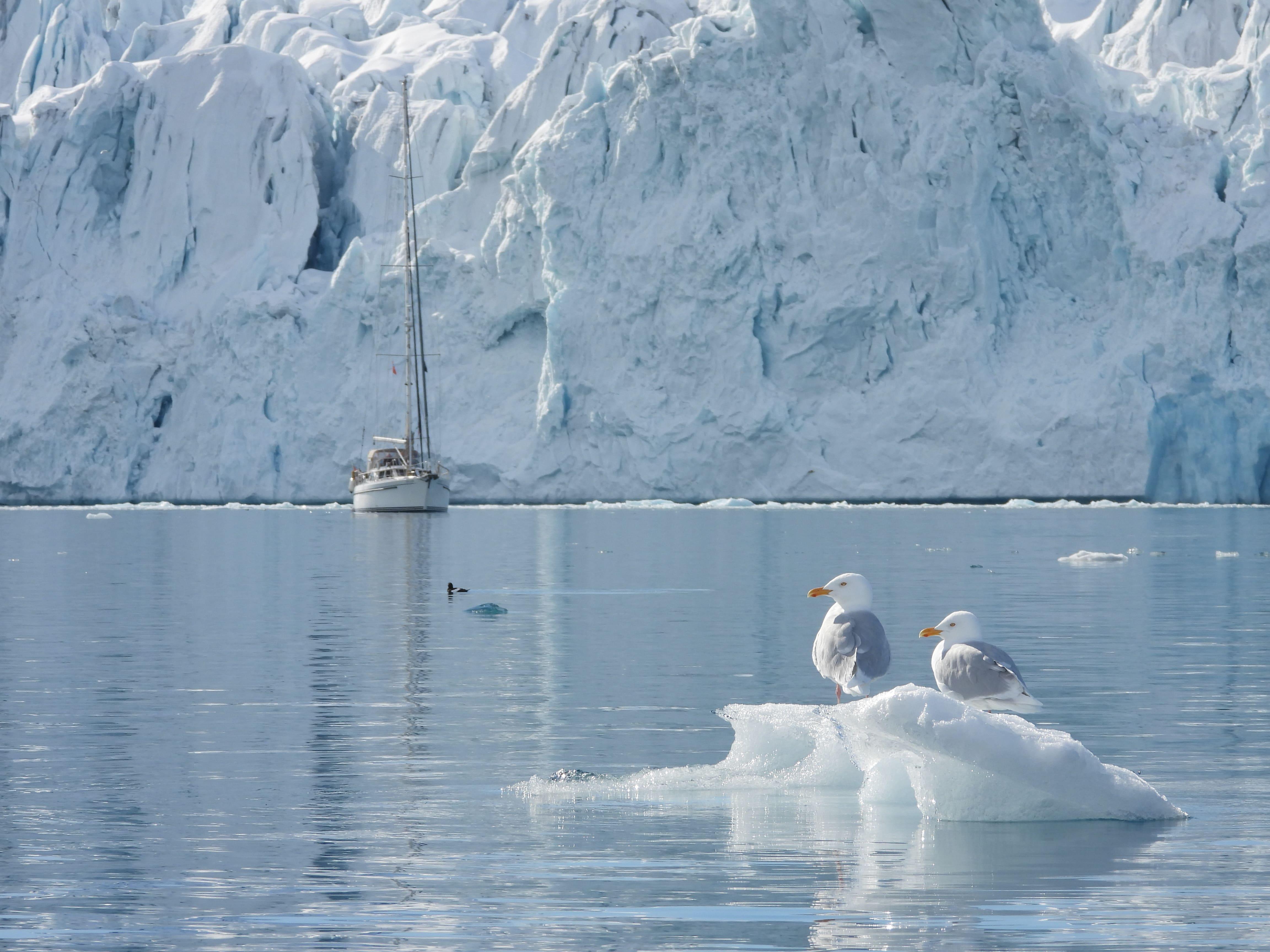 Möwen vor Gletscher