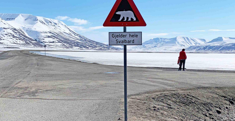 Eisbär Svalbard