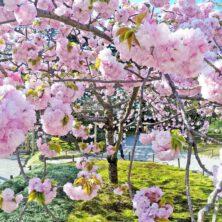 Pollen davon schippern – Heuschnupfen auf Kreuzfahrten? Tipps für Allergiker